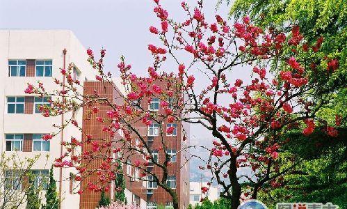 青岛大学校园风光