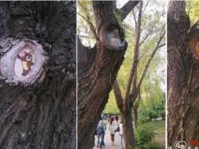 青岛农业大学内树洞创意涂鸦走红 残缺变激萌